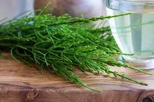 3 décoctions naturelles pour soigner vos plantes