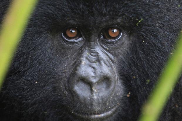Planète en péril : 60% des animaux sauvages ont disparu de la Terre en 44 ans