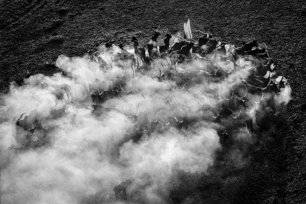 Campement nomade et troupeau, région du lac Tchad, Tchad (13°15' N - 15°12' E), 2004. Photographie Argentique, Tirage Numérique. Edition limitée à 5 exemplaires. , Yann Arthus-Bertrand