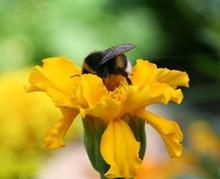 Les abeilles nous veulent du bien