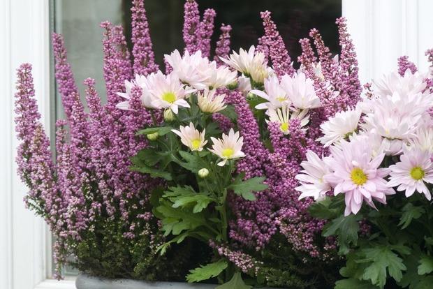 Jolies Jardinieres Pour Fleurir La Terrasse Ou Le Balcon En Hiver