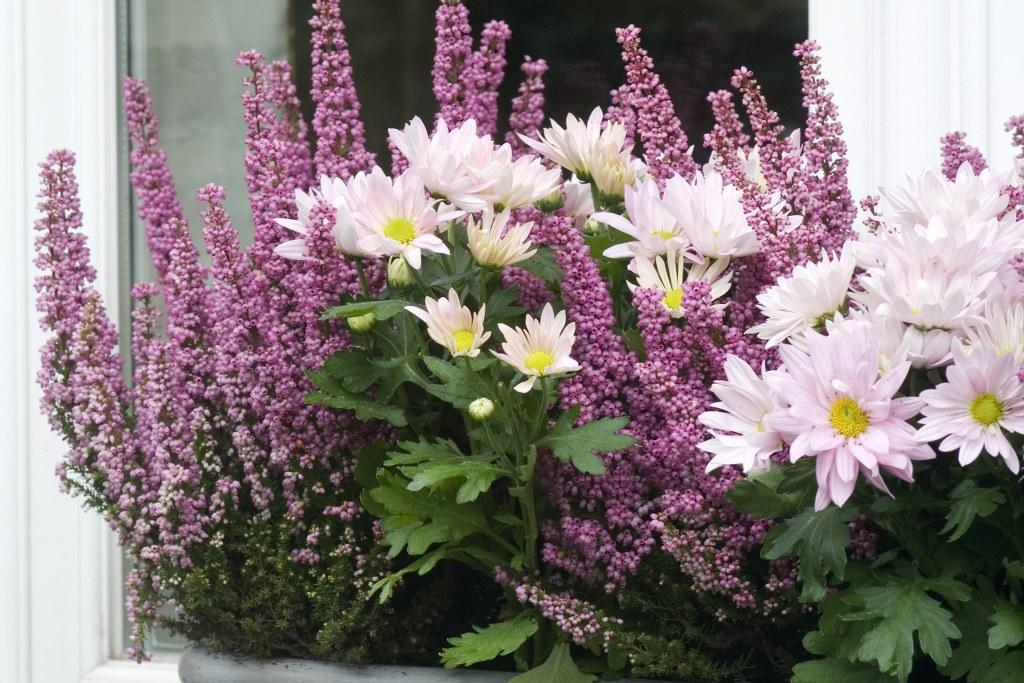 Jolies jardinières pour fleurir la terrasse ou le balcon en hiver loisirs plusmagazine be