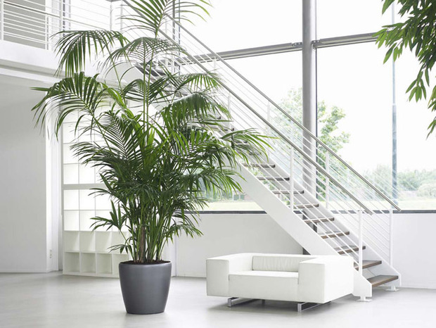 Le kentia plante anti stress sant plusmagazine - Plante de salon ...