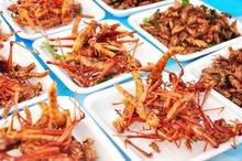 Consommation d'insectes : nouveau règlement européen en vue