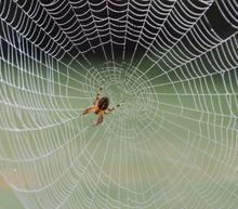 L'araignée, source d'angoisse pour beaucoup