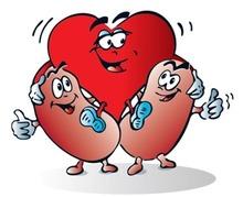 Les maladies cardio-vasculaires liées à l'insuffisance rénale