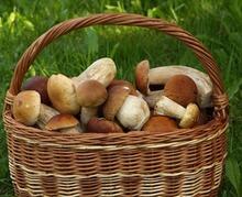 Les champignons ont tout bon !