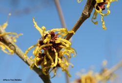 Ces fleurs qui résistent à l'hiver