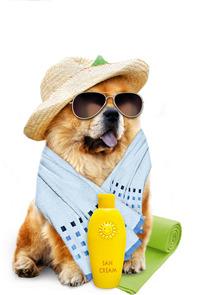 Attention aux coups de chaleur et de soleil!