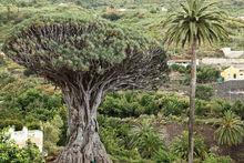 Escapade à Tenerife : 4 étapes et un carnet pratique