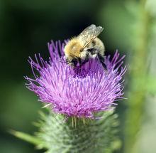 Sécher les plus belles fleurs du jardin ... tout en gardant la fraîcheur de leurs coloris.